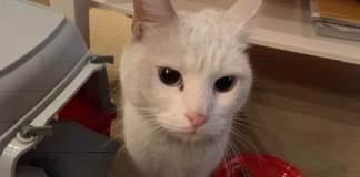 La gattina salvata oggi a Brescia