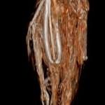 Immagine 3d della mummia di falco. Crediti: Studio Alquati, Milano