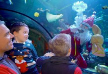Gardaland SEA LIFE Aquarium_Natale 2018