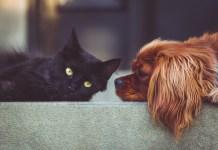 Gatto e cane, foto da Pixabay