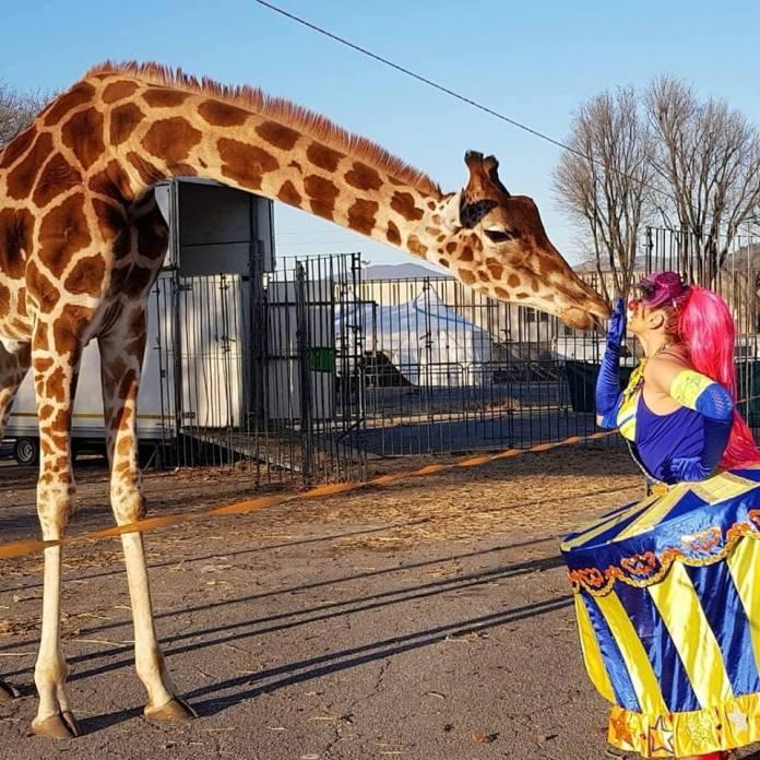 Il circo David Orfei a Brescia, foto da ufficio stampa