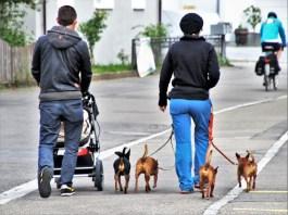 Una coppia con cani e passeggino, foto generica da Pixabay