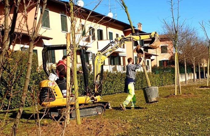 Piantumazione di alberi (foto generica da ufficio stampa Comune di Torbole Casaglia)