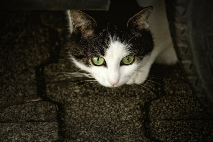 Un gattino, foto generica da Pixabay