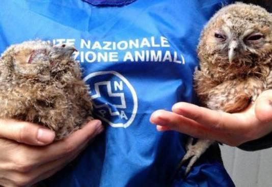 Enpa, Ente nazionale protezione animali