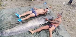 Il pesce siluro pescato nel fiume Adda - foto di William Passera su My Best Catfish- foto