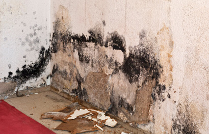 mold remediation company in medina ohio picture of black mold on a wall with drywall falling onto the floor