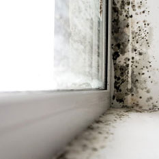 mold restoration in medina ohio picture of a moldy window sill