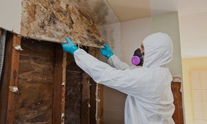mold remediation near wadsworth picture of a specialist cleaning mold inside a house