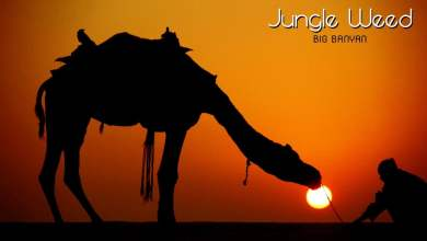 Photo of Jungle Weed – Big Banyan