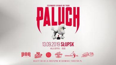 Photo of Paluch w Słupsku | Czerwony Dywan