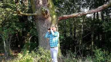 Photo of W lesie meta i lorneta