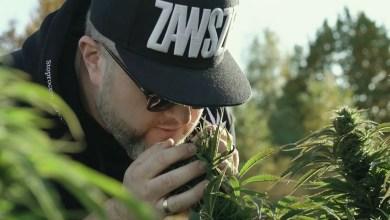 Photo of Zawsze Za! MOPS & djPETE