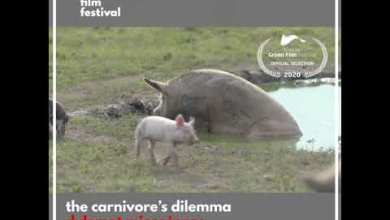 Photo of Dylemat mięsożercy / Carnivores Dilemma [TRAILER]