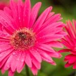 Botanical Garden Flowers