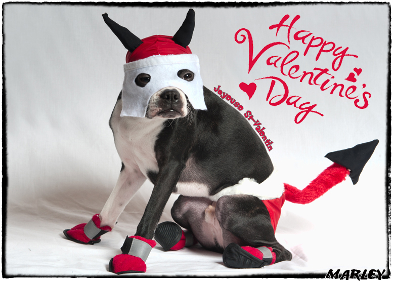 Happy Valentines Day Marley From Alma Quebec Canada