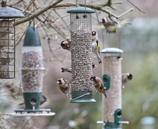 Feeding Garden Birds Bto British Trust For Ornithology