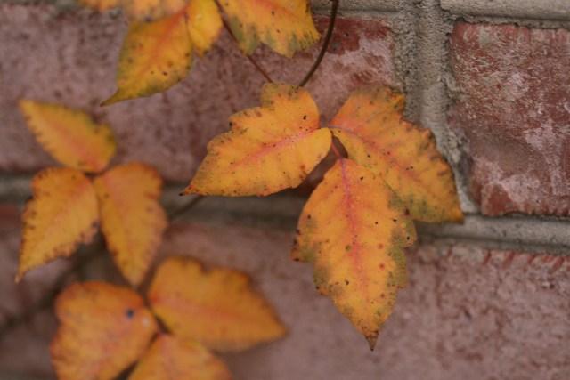 leaves-of-three_2055497455_o