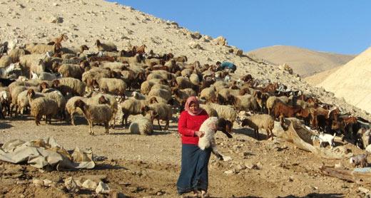 Resident of 'Ein Karzaliyah in the Jordan Valley. Photo: 'Atef Abu a-Rub, B'Tselem, 8 Jan. 2014