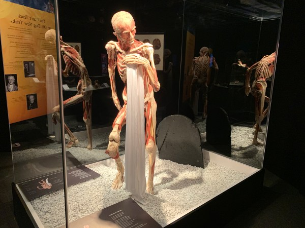 Today Human Body Museum Of