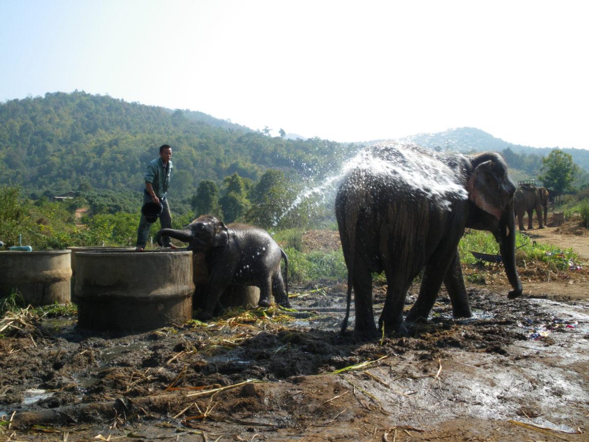 タイ王国増の水浴び