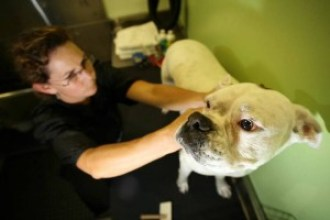Regular ear cleaning at Bubbles Pet Spa prevents ear infections.
