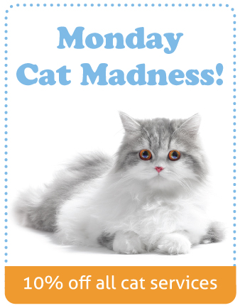 catmadness_image