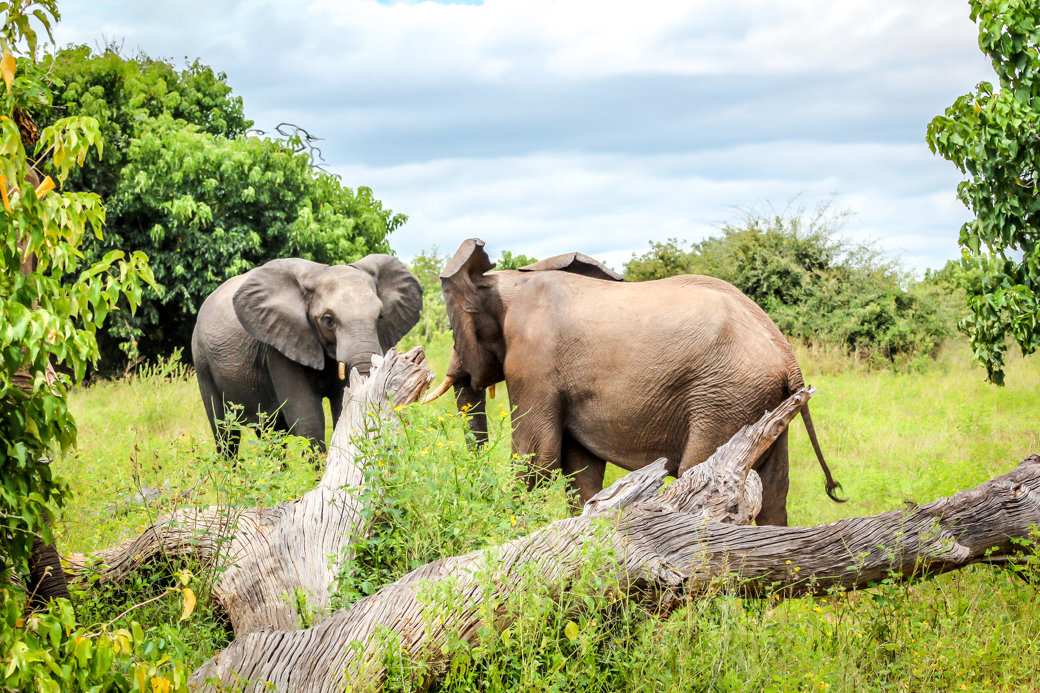 Elephant | Safari | Botswana | Chobe National Park | Sanctuary Chobe Chilwero Camp | Bubbly Moments