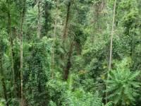 Mamu Canopy Walk & Photo Source