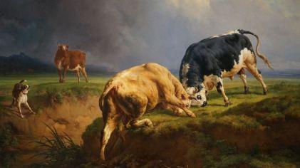 """On a toujours un """"truc"""" pour/avec les vaches! Ne nous jetez pas pierre; d'autres, c'est pour les shorts :-D"""