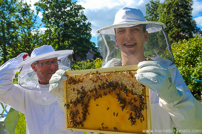 take-honey-from-a-bee-hive