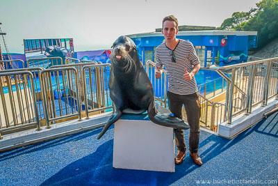 Seals - Bucket List