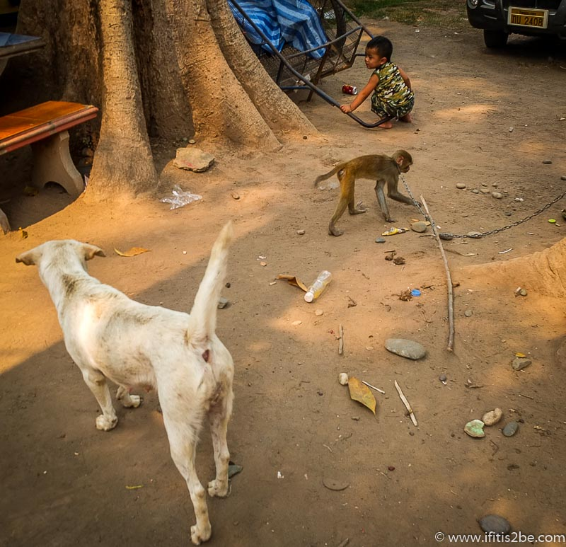 Laos Friends (Golden Triangle)