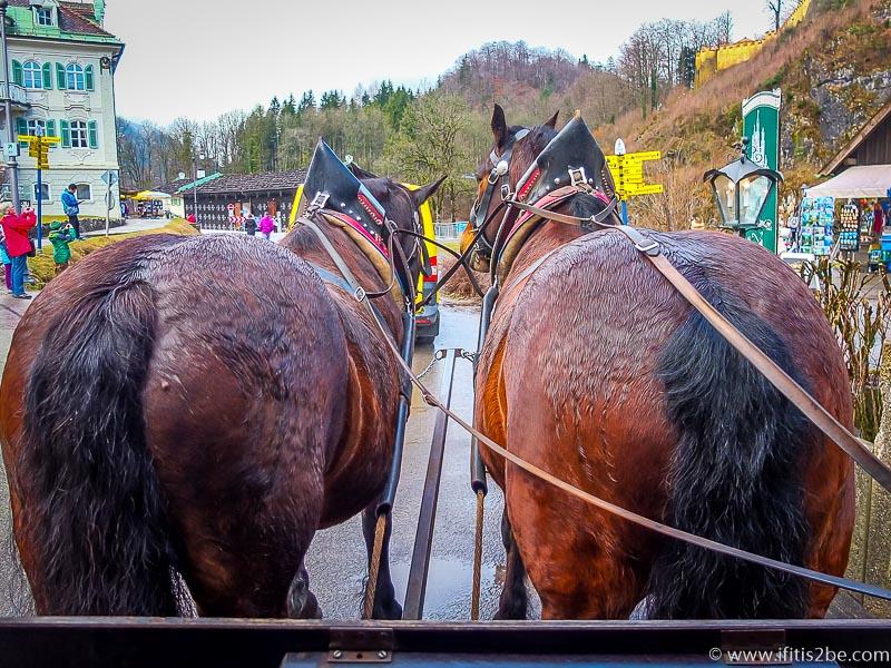 Horse-Ride-Neuschwanstein-Germany2
