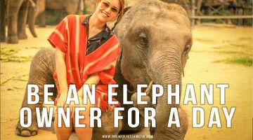 Be an Elephant Owner for a Day ✓