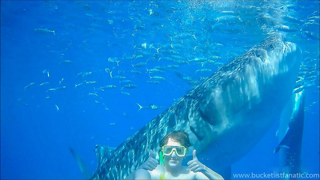 Swim with Whale Sharks in Cebu, Philippines - Jon Pedersen