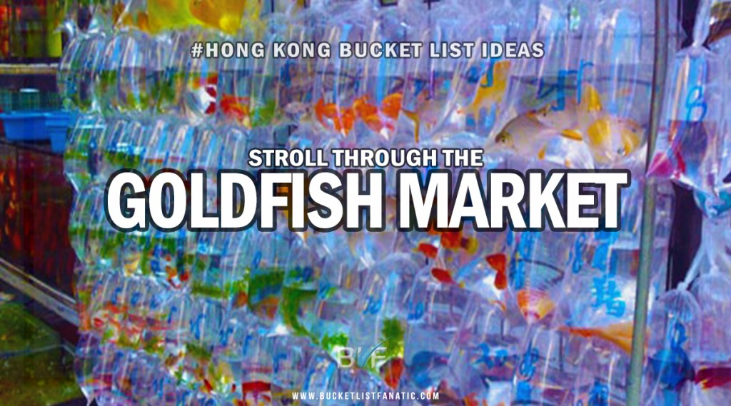 Hong Kong Bucket List - Gold Fish Market