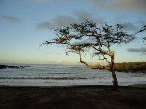 Dixie Maru Beach Molokai