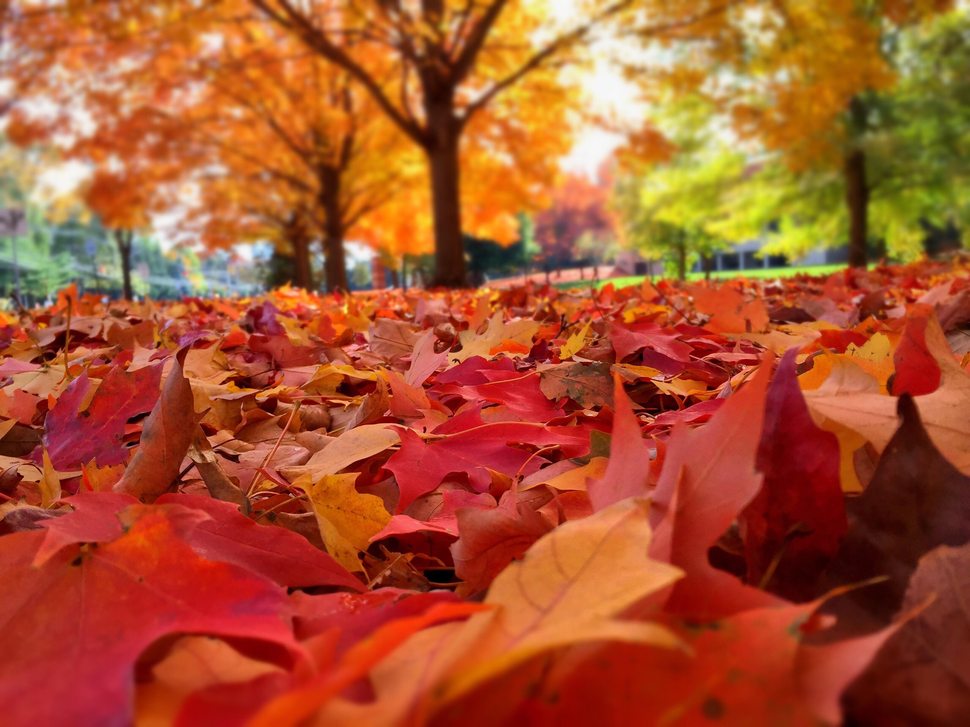 Fall In The Smokies Wallpaper Buckhorn Inn Bed And Breakfast In Gatlinburg Tennessee In