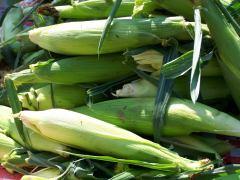 Corn; photo by L. Goldman