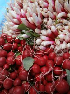Radishes at Wrightstown Farmers Market