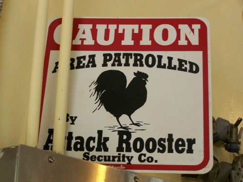 Attack Rooster