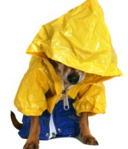 Dog in rain slicker