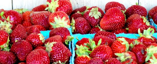 Shady Brook Farm strawberries; photo credit Lynne Goldman
