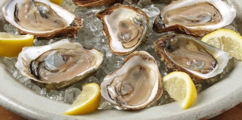 Oysters on the half shell, stock image