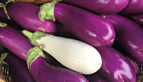 Eggplants from Blooming Glen Farm; photo credit L. Goldman