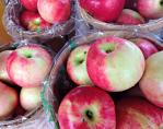 Apples from Solebury Orchards