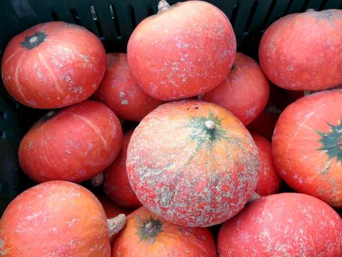 winter squash_pumpkins_photo L. Goldman