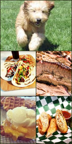 Bucks County Kennel Club Show