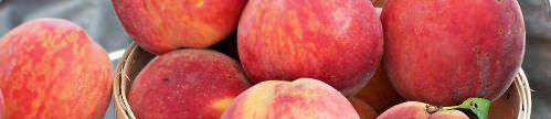 peaches banner plain_500x108